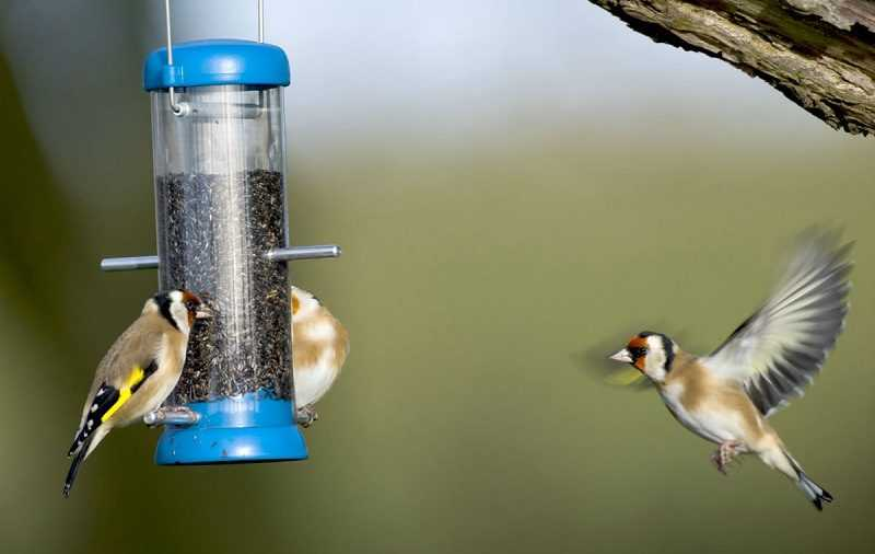 The most effective method to Attract Birds to Your Bird Feeder