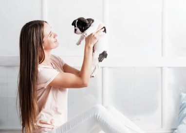 WHY IS THE FRENCH BULLDOG SO POPULAR?