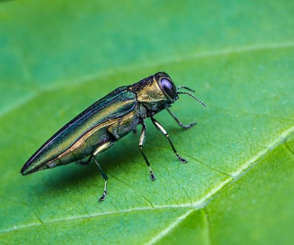 How to manage intrusive bugs while protecting pollinators and other helpful pests?